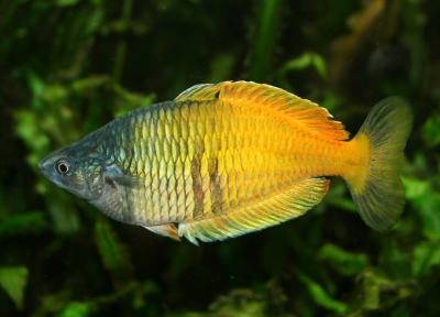 s wasserfische aufregende unterwasserwelten im aquarium